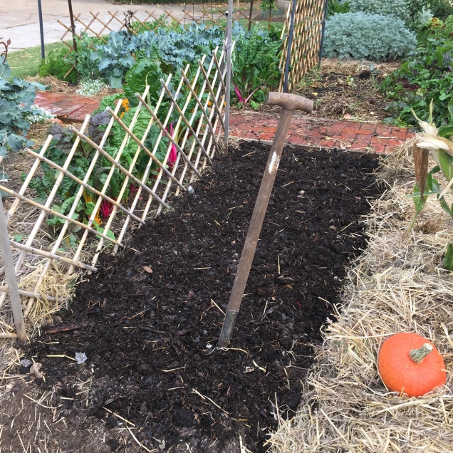 Garden bed forked over after being spread with manure and compost