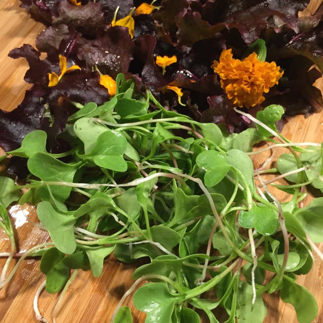 Thin radish shoots and use them as micro greens to add sweetness to an autumn salad.