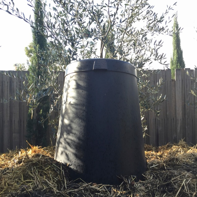 The traditional cool compost bin with lid in place. The bin has been positioned in front of an olive tree which will benefit from the seeping nutrients and worm activity at the base of the bin.