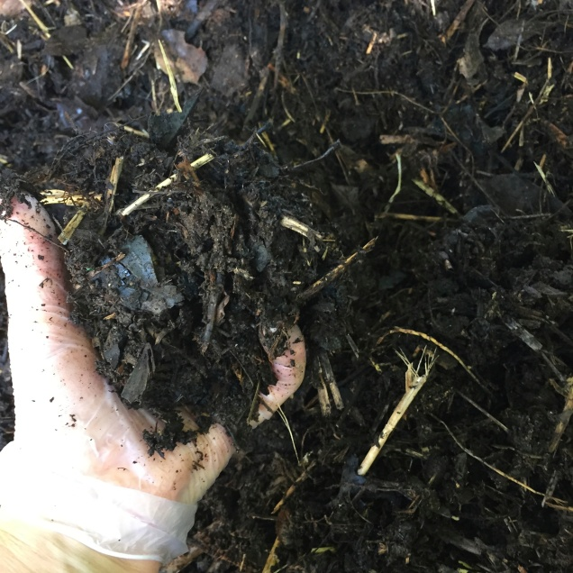 Friable compost ready to spread on garden beds, worms and micro organisms contained in the compost will recharge the soil and promote healthy growth in plants