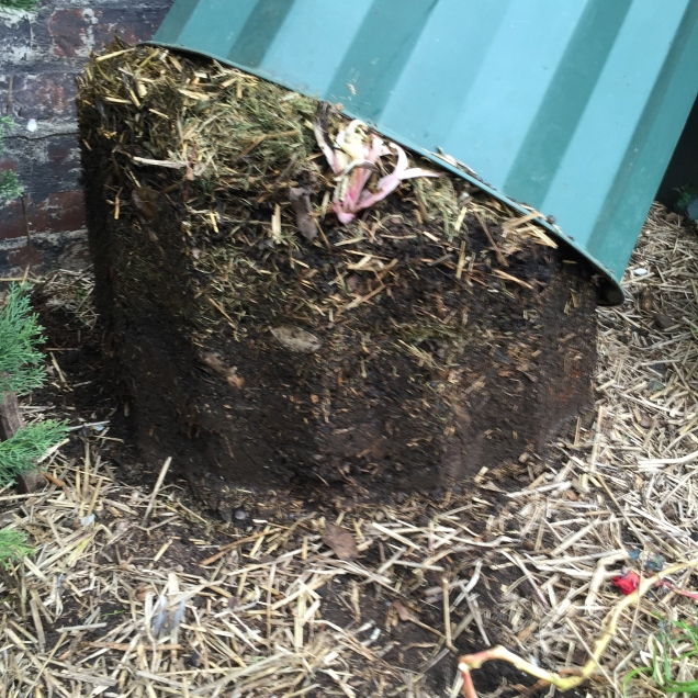 The skin of a compost bin being slipped off the mix, the lower layers are always compacted and quite dense. The upper layers will be semi decomposed and perfect for starting off the next compost cycle. Separate the mix and use the best parts on the garden.